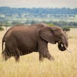 BÖLGE KİMLİKLERİ: AFRİKA